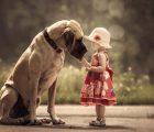 Nằm mơ thấy chó đánh con gì ăn chắc, có điềm báo gì