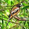 Chim khách kêu có điềm báo gì và nên đánh đề con gì